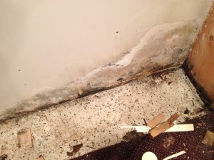 mold in michigan home