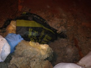 moldy crawl space MI