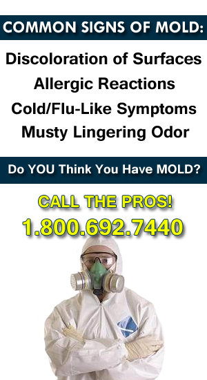 michigan mold removal services MI