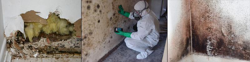 macomb county michigan mold removal and environmental cleanup
