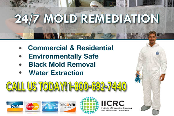 michigan mold removal