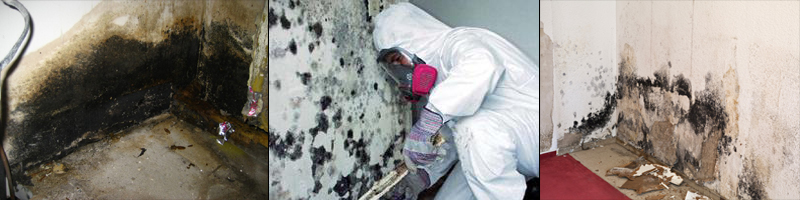 mold removal service oakland county MI