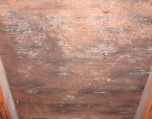 mold in attic space MI