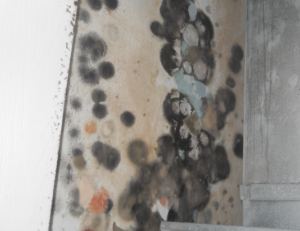 mold infestation in michigan home MI