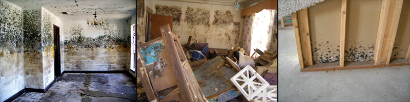 mold damaged buildings mi