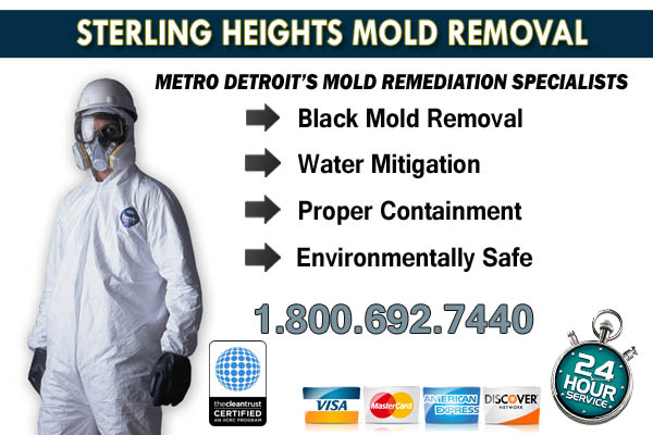 sterling heights  mi mold removal