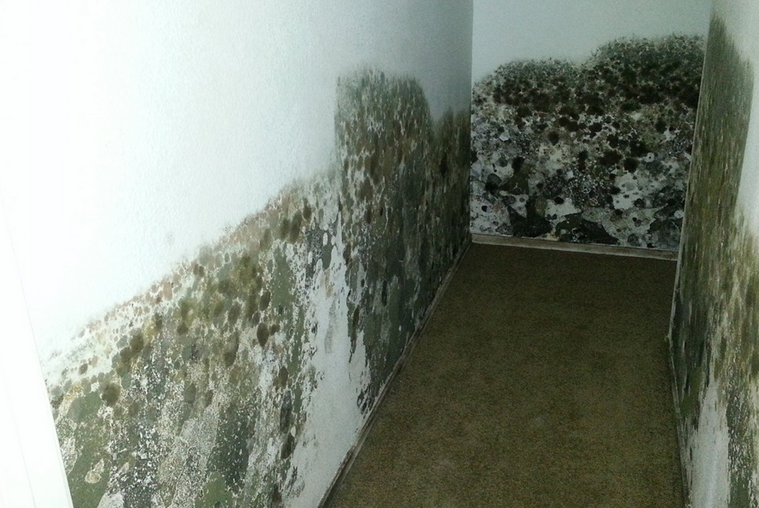 Basement Flooding Turns To Mold